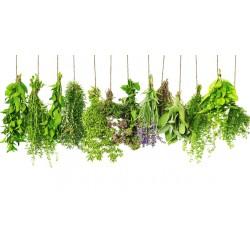 Pack Herbodietética y Homeopatía 500 h  +  Dietética y Nutrición 500 h