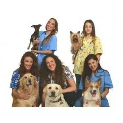 Ayudante veterinario